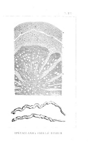 Pàgina 201