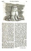 Pàgina 539